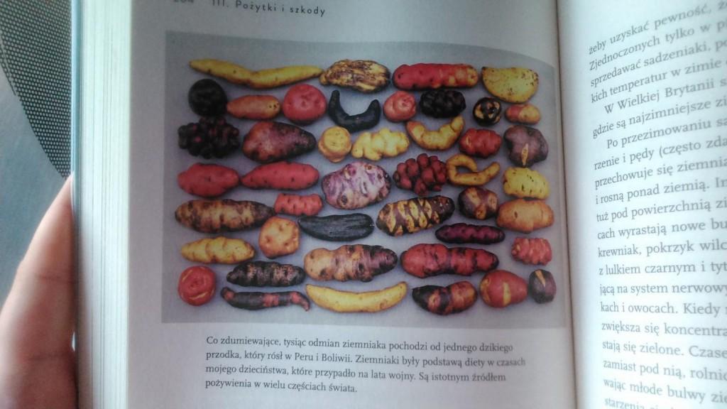 to wszystko ziemniak - obrazek, który pokazuje, jak mało wiemy i jak mało jesteśmy świadomi różnorodności świata roślin